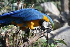 Exotic bird. parrot Stock Images