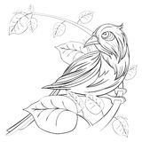 Exotic bird sitting on a branch with leaves on white background. Vector outline illustration with hand draw to spring season. Greeting card design Royalty Free Stock Photos