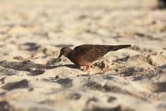 Exotic bird Stock Photography