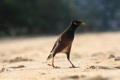 Exotic bird walking along the beach Stock Photos