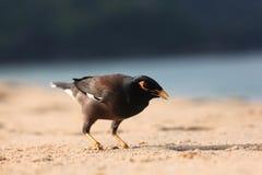 Exotic bird walking along on beach Stock Photos