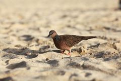 Exotic bird walking at beach Stock Photography