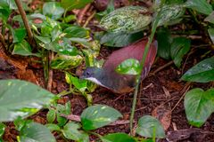 Exotic bird in zoo. Jungle, Germany Cologne Stock Photo