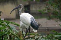 Exotic birds stock photo
