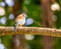 Exotic birds and animals in wildlife in natural setting.  stock photo