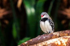 Exotic birds and animals in wildlife in natural setting.  stock image