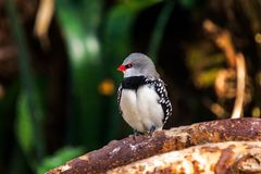 Exotic birds and animals in wildlife in natural setting.  royalty free stock photos
