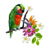 Exotic birds and beautiful flowers. Vector exotic birds parrot and beautiful flowers Royalty Free Stock Photography