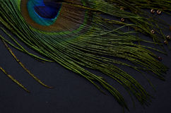 Exotic feathers. Beautiful green feathers with gold beads Royalty Free Stock Images