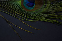 Exotic feathers. Beautiful green feathers with gold beads Stock Photo