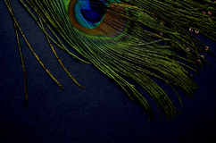 Exotic feathers. Beautiful green feathers with gold beads Royalty Free Stock Photography