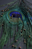 Exotic feathers. Beautiful green feathers with gold beads Stock Images