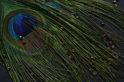 Exotic feathers. Beautiful green feathers with gold beads Stock Image