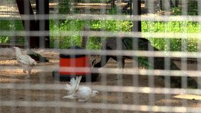 Exotic birds drinking and eating. View through cage bars. Closeup shot. 4K stock video footage