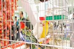 Exotic birds at GRAN Balkan Cup Competition Stock Image