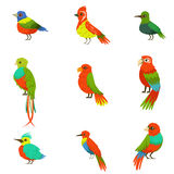 Exotic Birds From Jungle Rain Forest Set Of Colorful Animals Including Species Of Paradise Birds And Parrots. Winged Fauna Of Southern Regions With Bright Stock Images