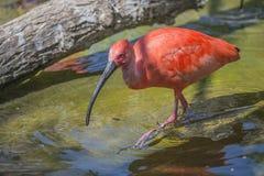Exotic birds Stock Photos