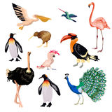 Exotic Birds Set Stock Image