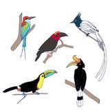 Set of the exotic birds standing on the tree vector illustration