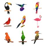 Exotic Birds Set Royalty Free Stock Images