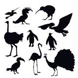 Exotic Birds Silhouettes Stock Images