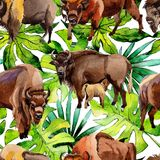 Exotic bison wild animal pattern in a watercolor style. Stock Image