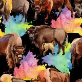Exotic bison wild animal pattern in a watercolor style. Royalty Free Stock Photos