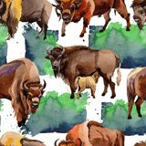 Exotic bison wild animal pattern in a watercolor style. Royalty Free Stock Image