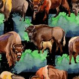 Exotic bison wild animal pattern in a watercolor style. Royalty Free Stock Photography