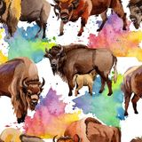 Exotic bison wild animal pattern in a watercolor style. Stock Images