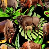 Exotic bison wild animal pattern in a watercolor style. Royalty Free Stock Photo