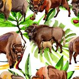 Exotic bison wild animal pattern in a watercolor style. Stock Photography