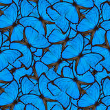 Exotic blue background made of velvet  Blue Morpho butterflies,. The beautiful seamless blue texture Stock Photo