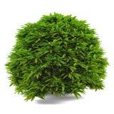 Exotic bush  Royalty Free Stock Photos