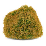 Exotic bush . Royalty Free Stock Photo