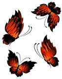 Exotic butterflies Stock Images