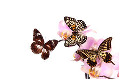 Exotic butterflies Royalty Free Stock Photography