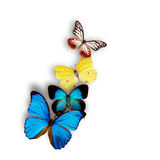 Exotic butterflies Royalty Free Stock Images