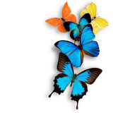 Exotic butterflies Royalty Free Stock Image