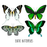 Exotic butterflies collection Royalty Free Stock Photo