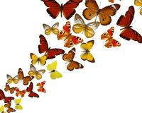 Exotic butterflies on white background Stock Photos