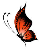 Exotic butterfly Royalty Free Stock Photos