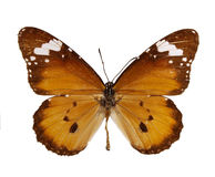 Exotic butterfly stock photography