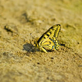 Exotic butterfly Stock Photo