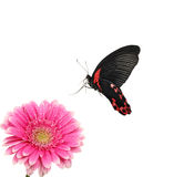 Exotic butterfly Stock Images
