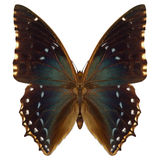 Exotic Butterfly Stock Photos