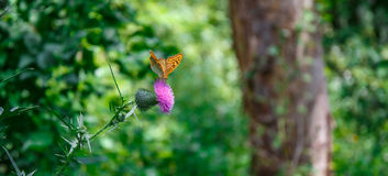 Exotic butterfly. Exotic butterfly passing through the virgin tropical forest Stock Photo