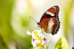 Exotic butterfly on the flower Stock Photos