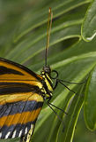 Exotic butterfly. Image taken from the butterfly exhibit at the Seattle Science Center stock images
