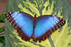 Exotic butterfly in natural habitat Royalty Free Stock Images